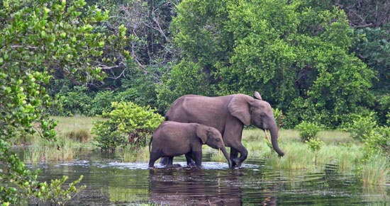 Akanda National Park in Gabon
