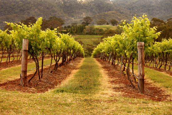 Hunter Wine Country Tops Ratings for Tourism Accommodation