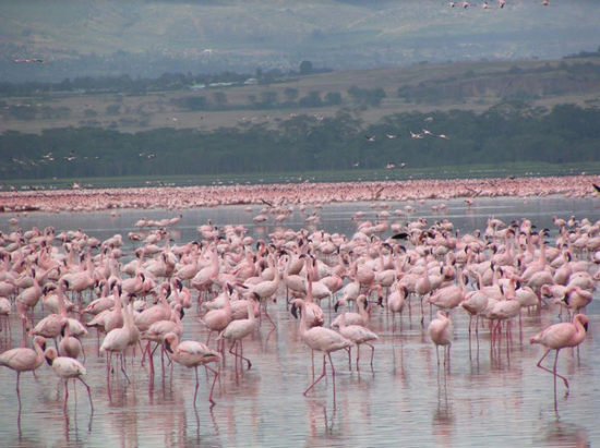 Lake Naivasha best Destination