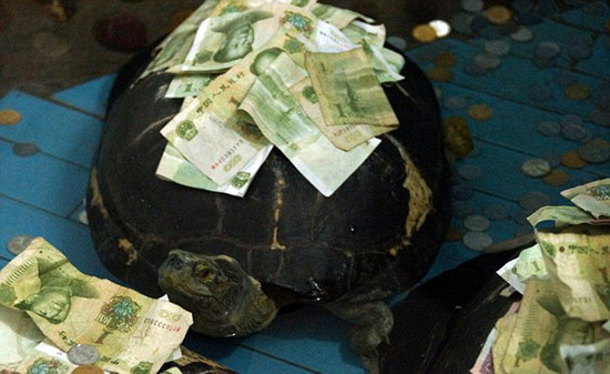 Tourists plaster turtles in Chinese zoo with money