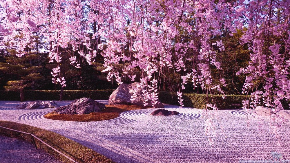 Beyond cherry blossoms in