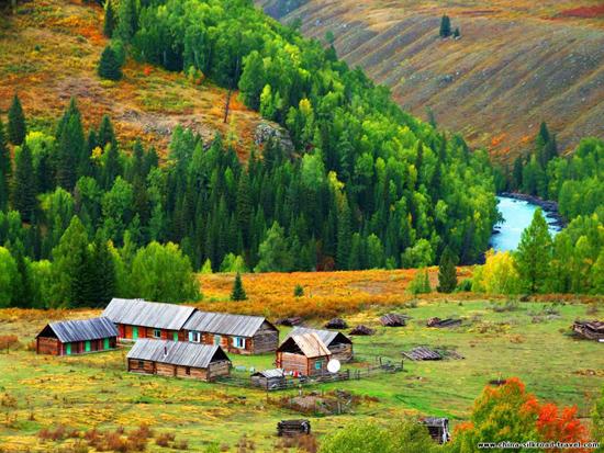 Tarim Poplar Forest Natural Reserve, Xinjiang
