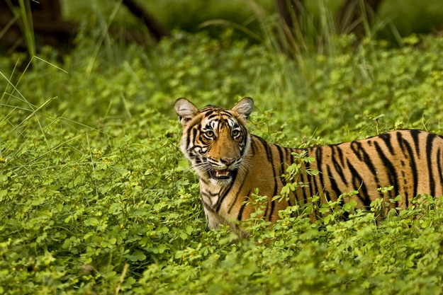 Most wildlife Destination in India to visit before monsoon