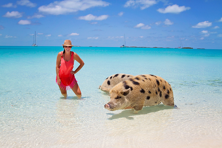 Swimming with Caribbean PIGS is the latest travel trends,Bah