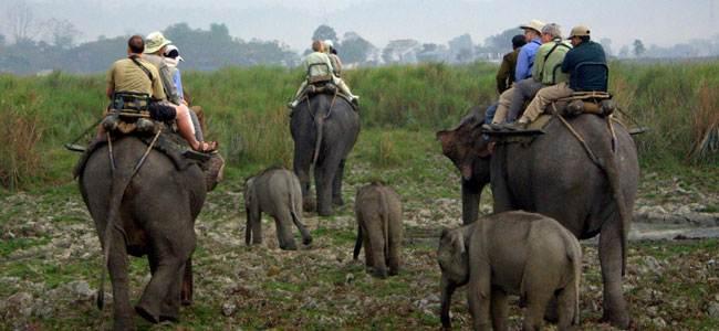 A  Wildlife Tour of South India
