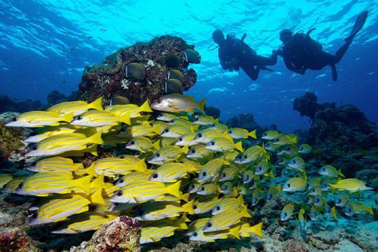 Maldives- Banana reef snorkeling