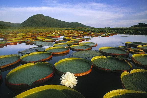 best place Pantanal (Brazil)