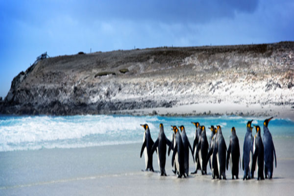 Places To See In Falkland Islands