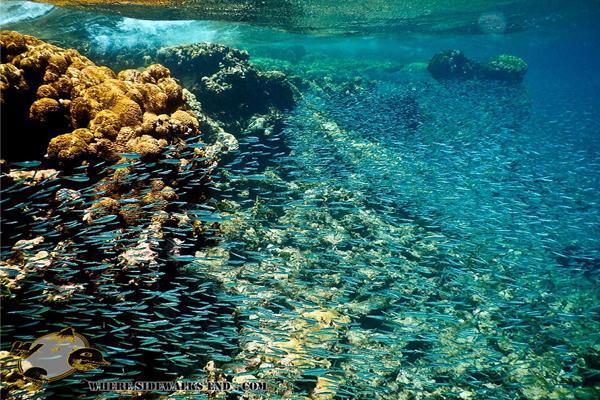 Los Roques Venezuela shallow water life