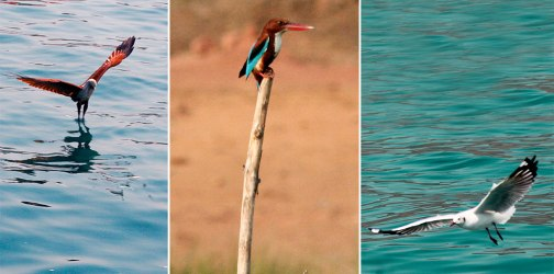 Goa Bird Watching Tour