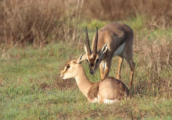 Gazelle Valley Urban Wildlife Park Opens in Jerusalem