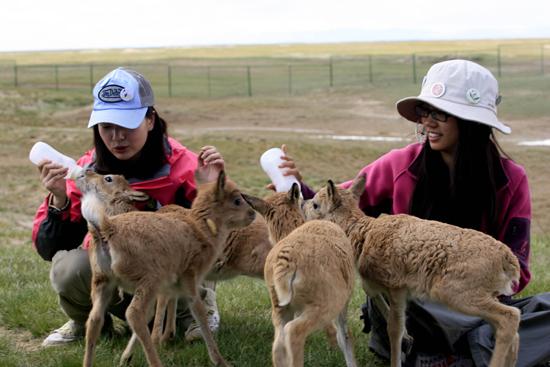 Hoh Xil, Tibet
