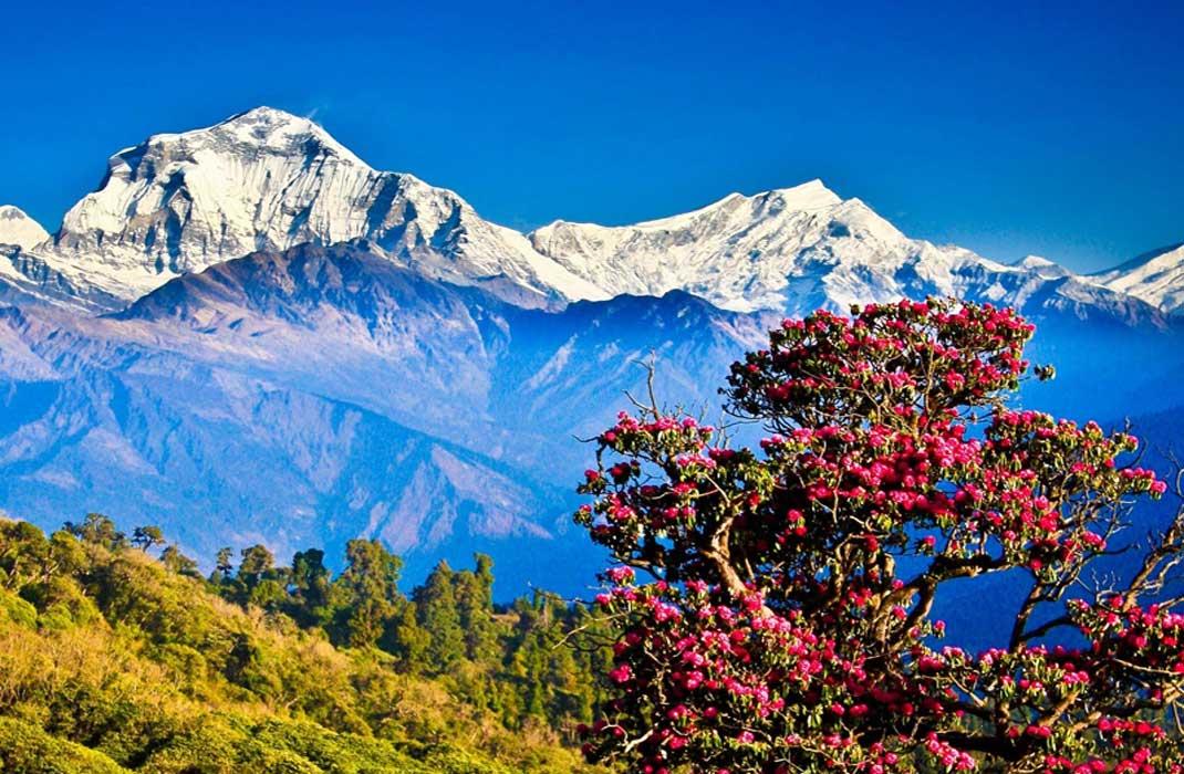 Wonderful Bhutan Family Hollyday Package