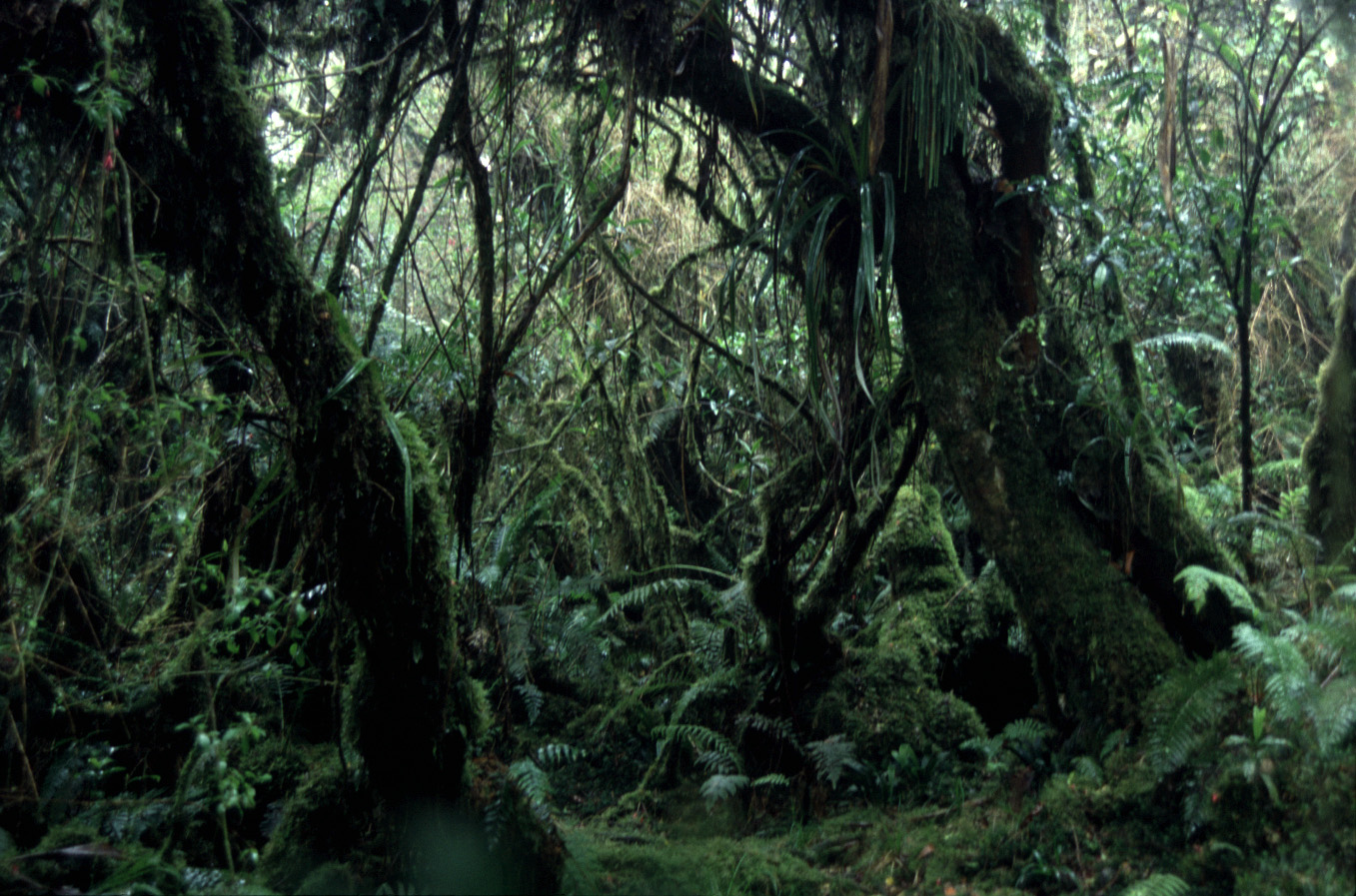 Magical Bebour Forest