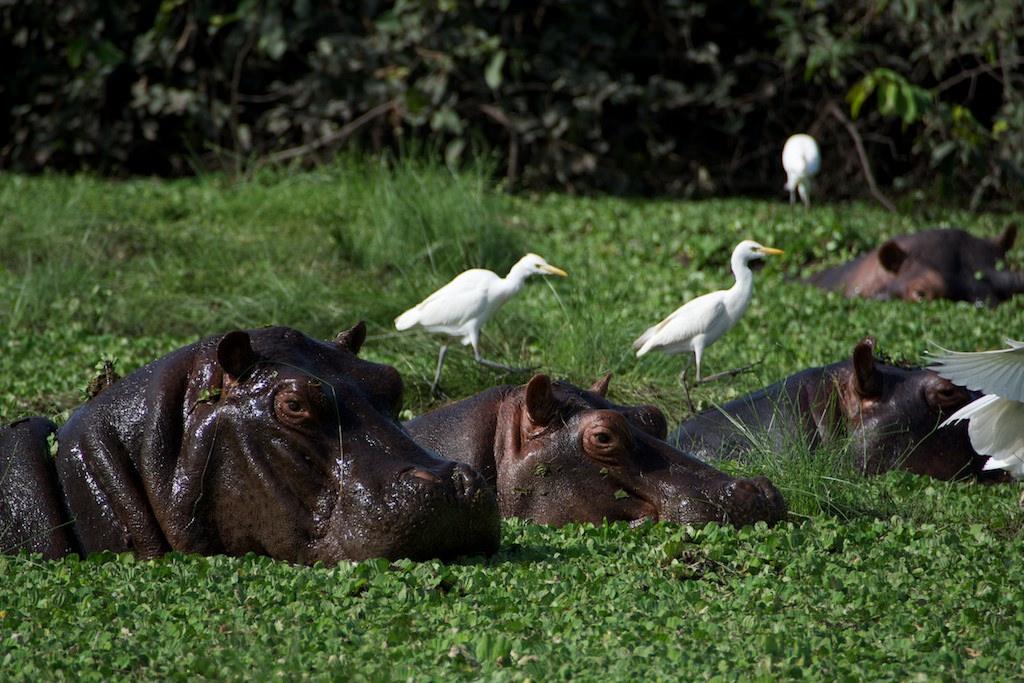 Orango Island