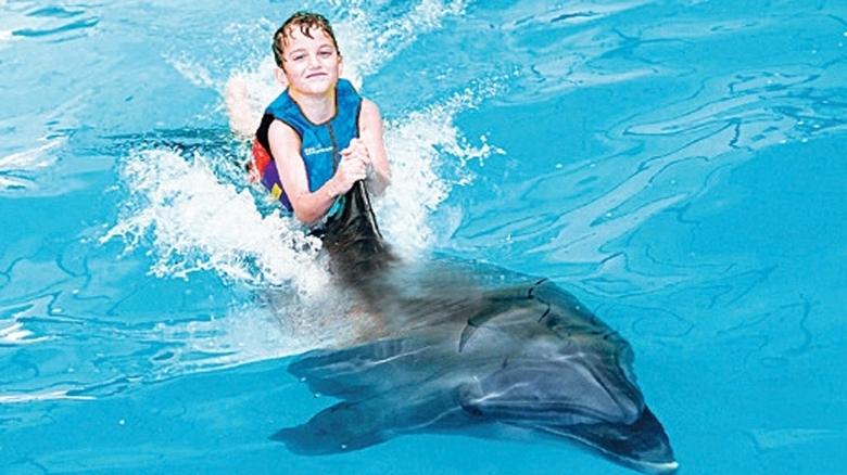 Dubai Dolphinarium - Dolphin Shows - Seal Shows