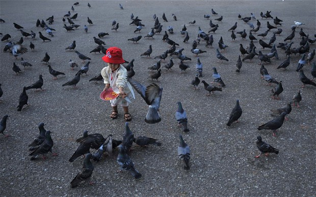 Feeding pigeons or chewing gum can land you in hot water abr
