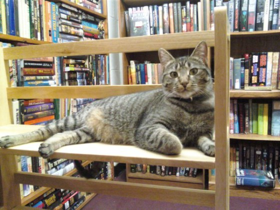 Six places where cats outshine tourist attractions